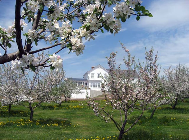 Orchard in 2nd week of May