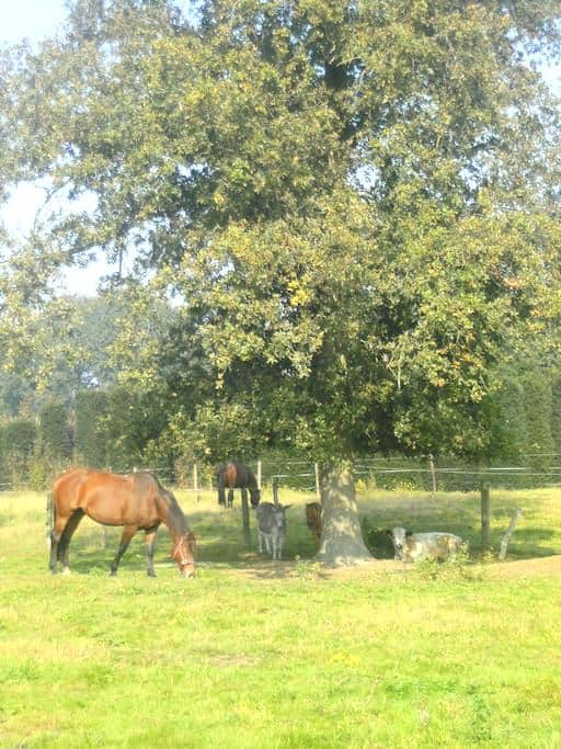 de Luythoeve - Meeuwen-Gruitrode - Casa