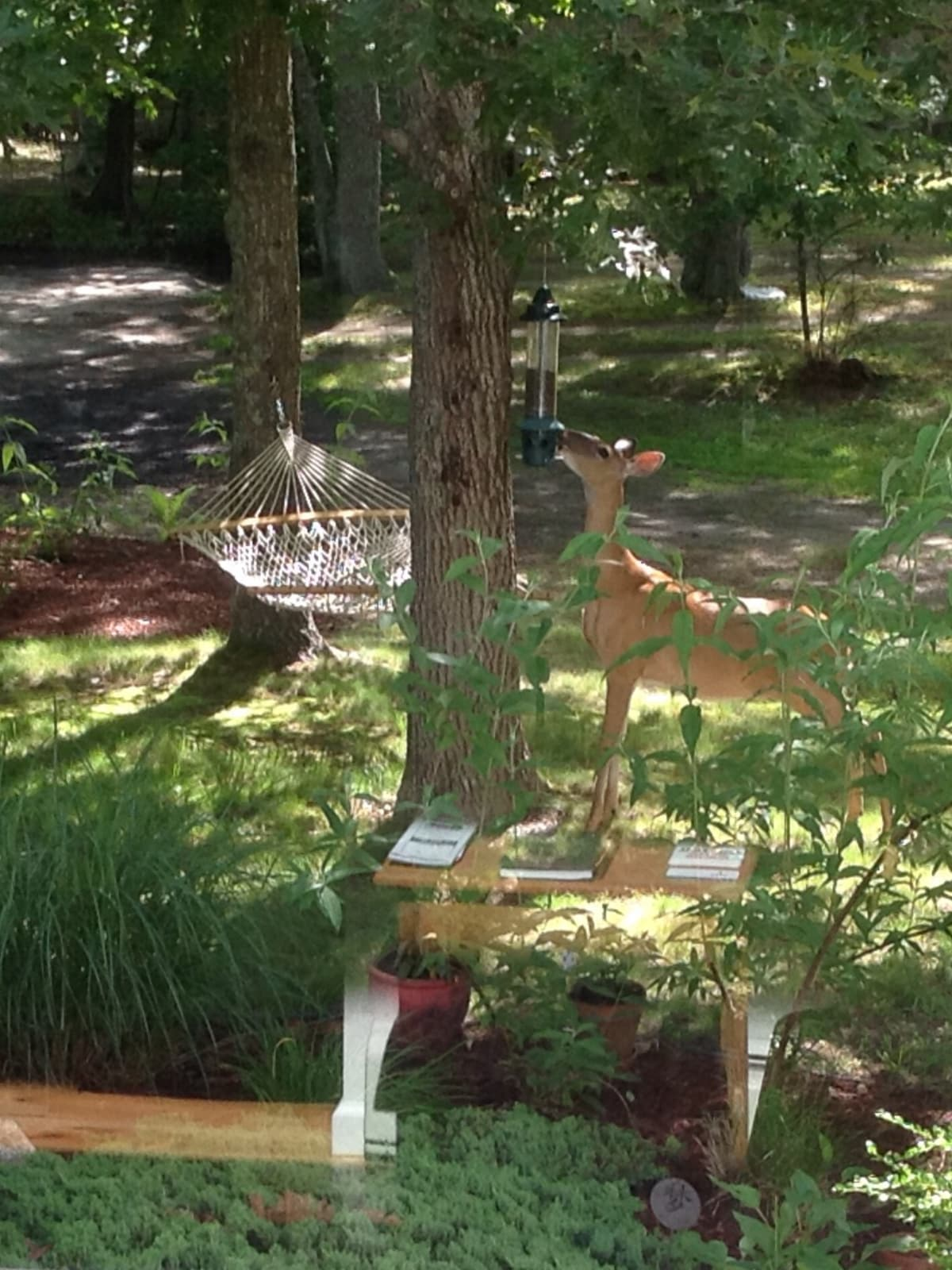 Living with Nature June 21 2014  Picture taken early Morning looking out the front door!