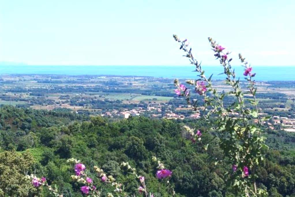 Chambre avec vue panoramique - Castellare-Di-Casinca - Bed & Breakfast