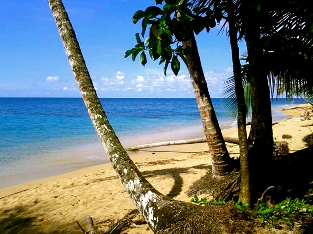 Punta Uva Beach just 5-10 minutes away from Physis Caribbean Bed and Breakfast