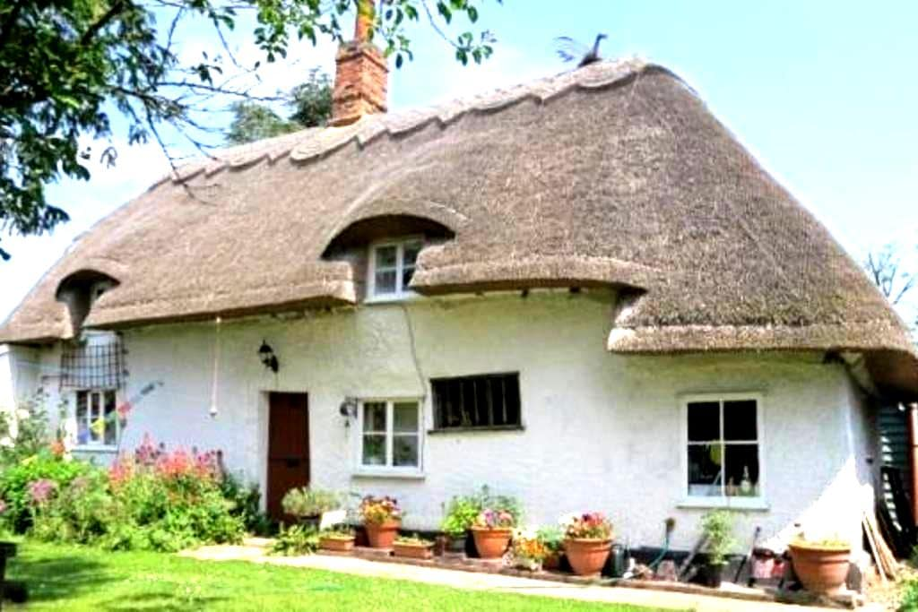 Entire Thatched Cottage - Melbourn - Haus