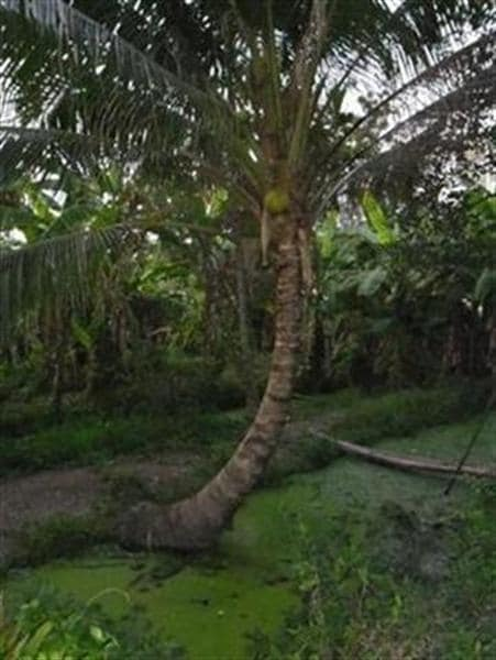 A natural oasis in central Bangkok!