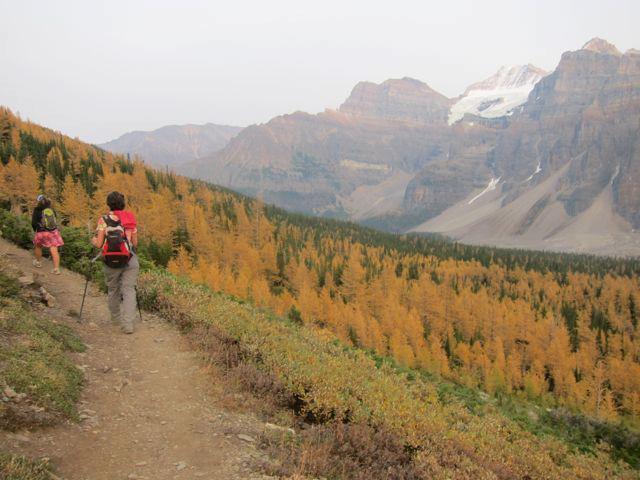 September hiking, Lake Louise. Beautiful Larches and wonderful hiking weather.
