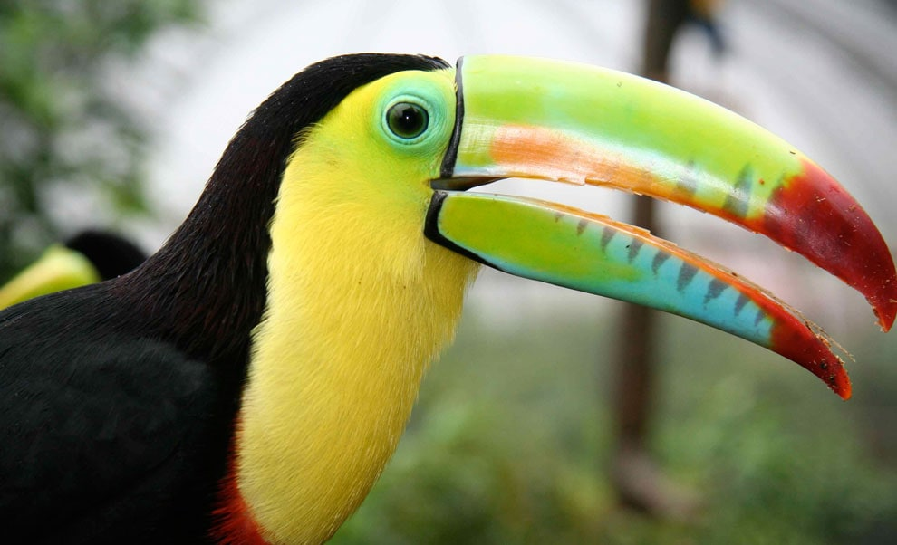 Toucans are La Palapa Best friends everyday - Hotel La Palapa Ecolodge Resort