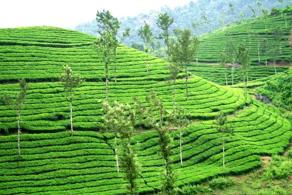 Tea Break Holiday Home - Vythiri - Hus