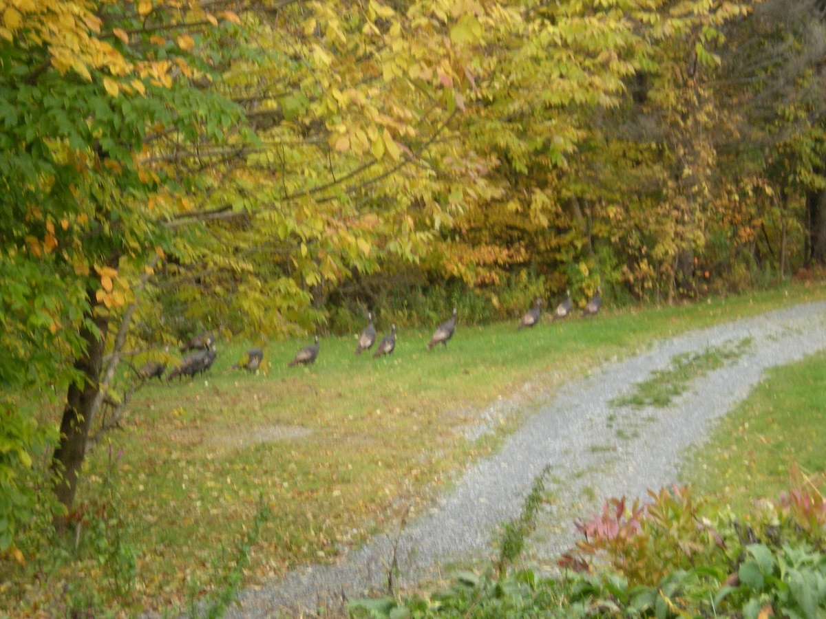 Turkey visitors in the Fall