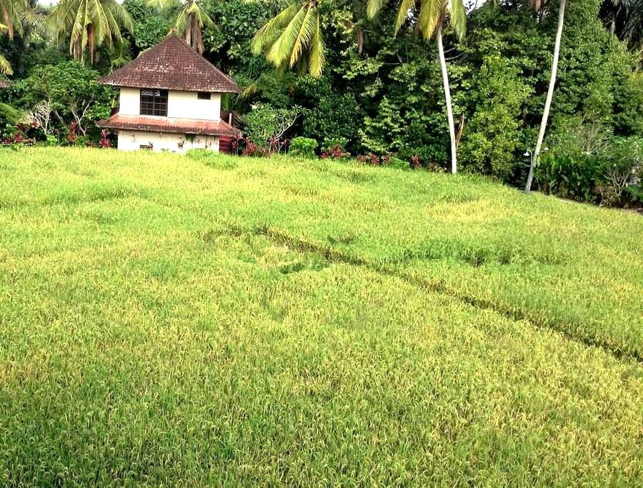 SOLO: OVERLOOKING the JUNGLE - Ubud - Apartamento