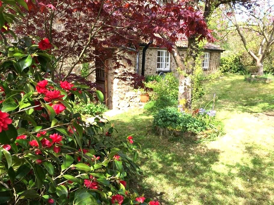 Charming old cottage, spacious rooms & garden - Culmstock  - Dům