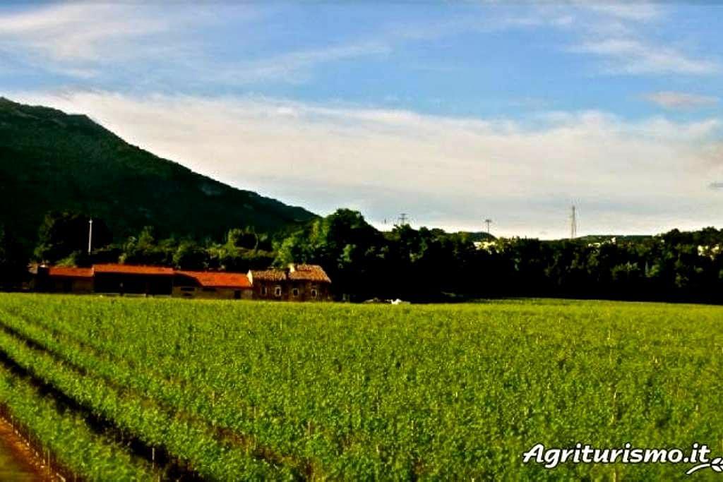 Farmhouse '700 in the vineyard  (3) - Rivoli veronese - Bed & Breakfast