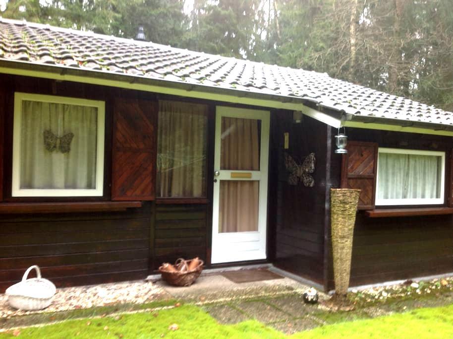 Ruimte en (bos) natuur in de Achterhoek - Winterswijk