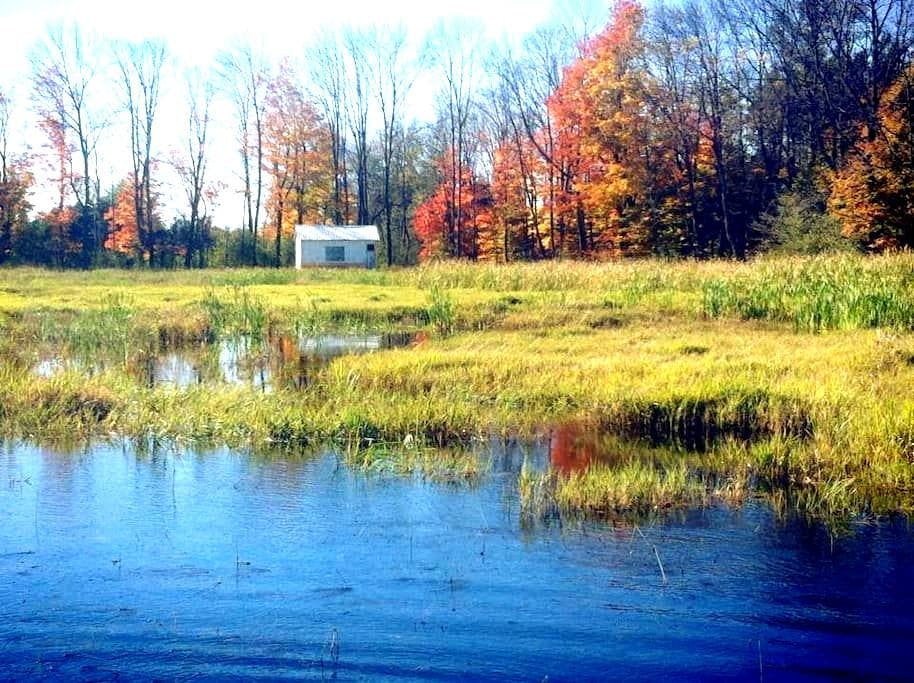 Little Cabin on the Marsh - Kawartha Lakes