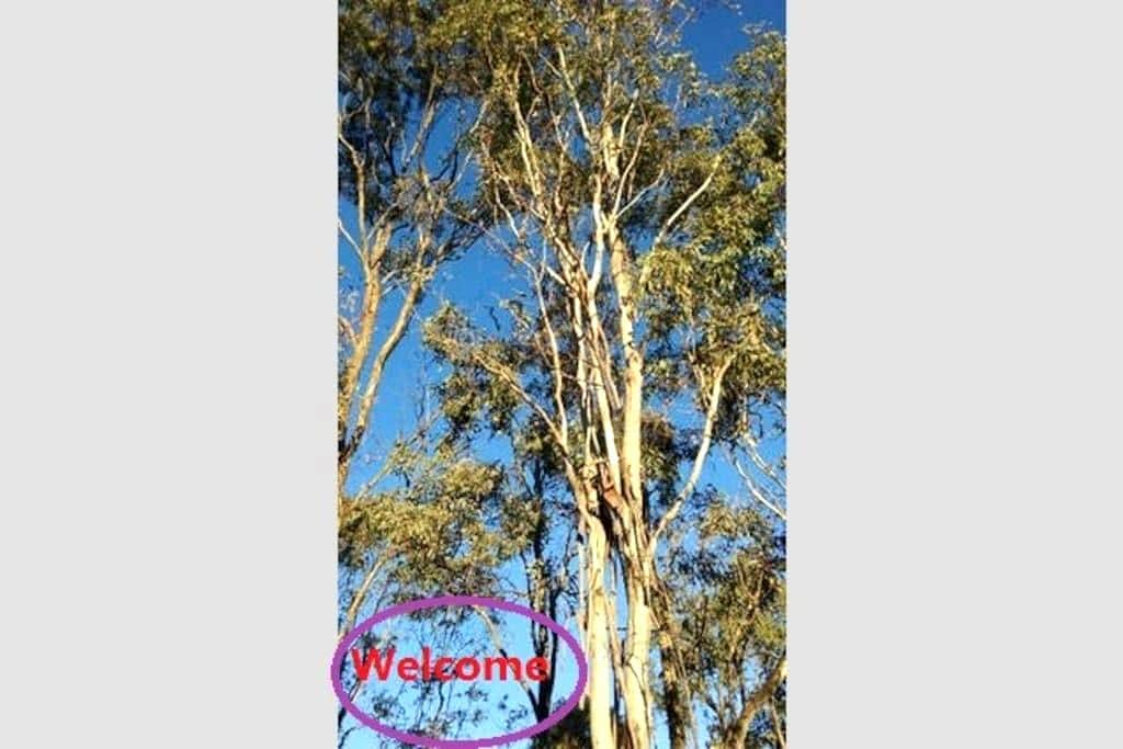 North Hill, Golden Trees Cottage  Armidale NSW - Duval - Bungalow