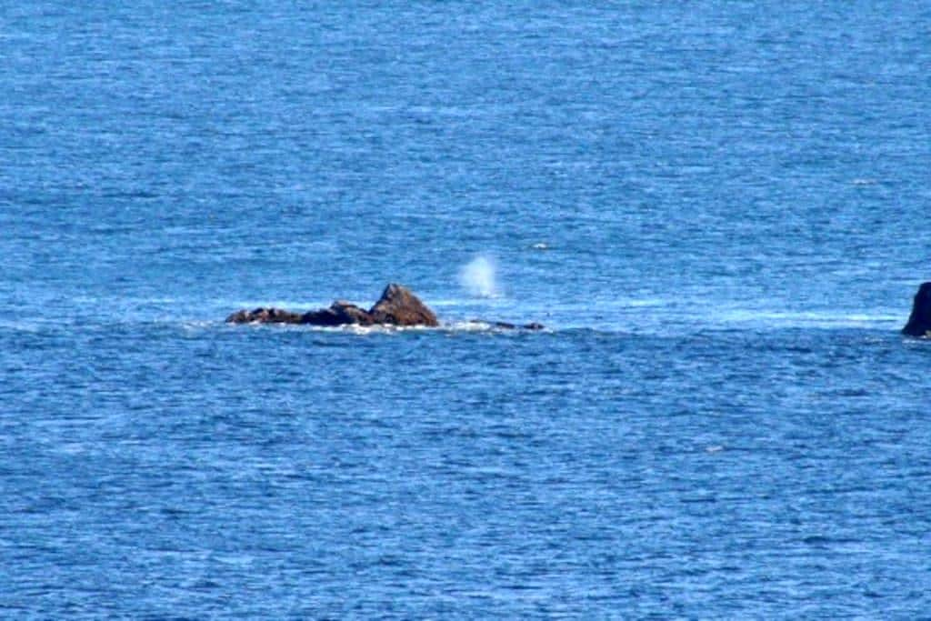 Watch the whales from Rainbow Rock - Brookings - Apto. en complejo residencial