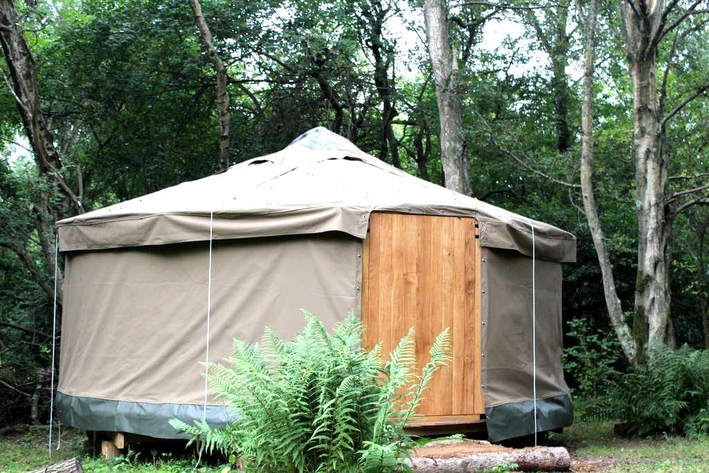 Yurt luxury woodland camping - Newick