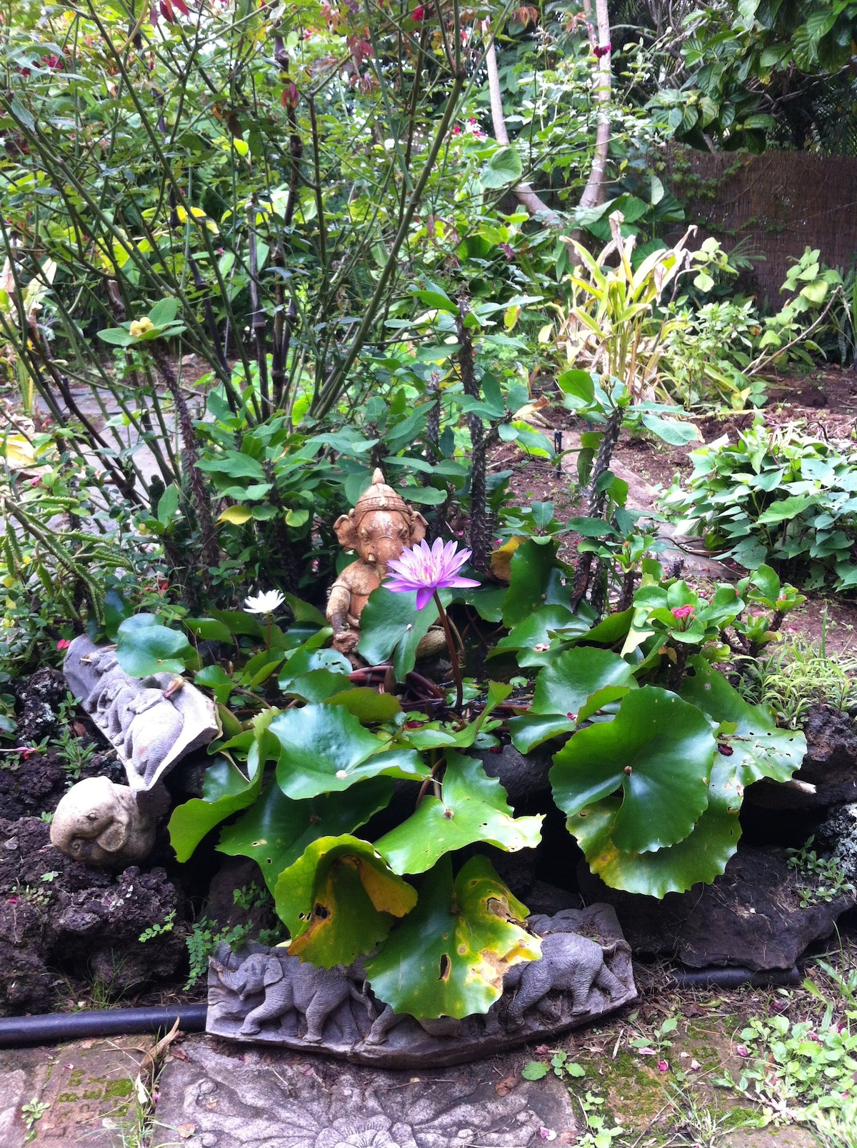 A lovely lotus pond sits directly across the front door as you approach the house.