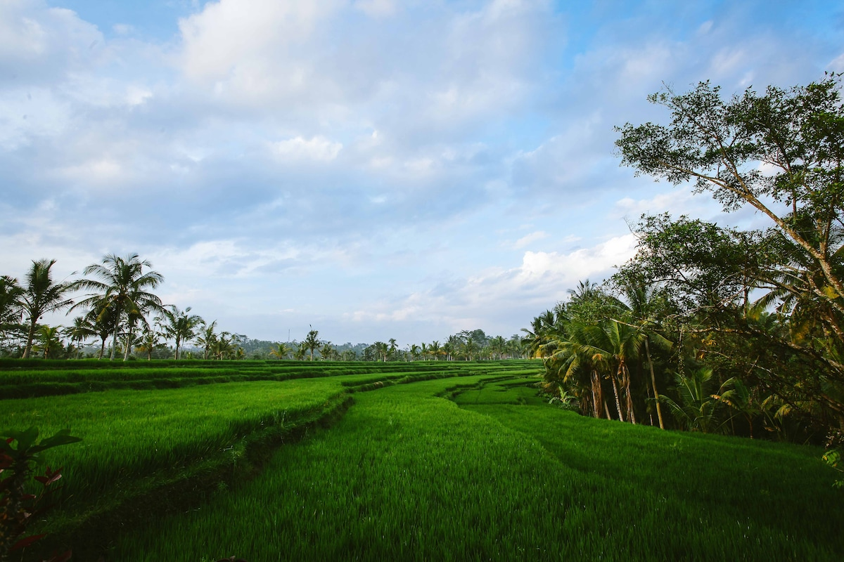 Spectacular view of rice paddies