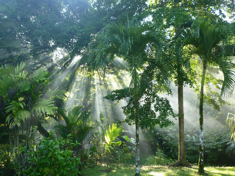 The gardens of Casa los Suenos are always kept in immaculate condition.