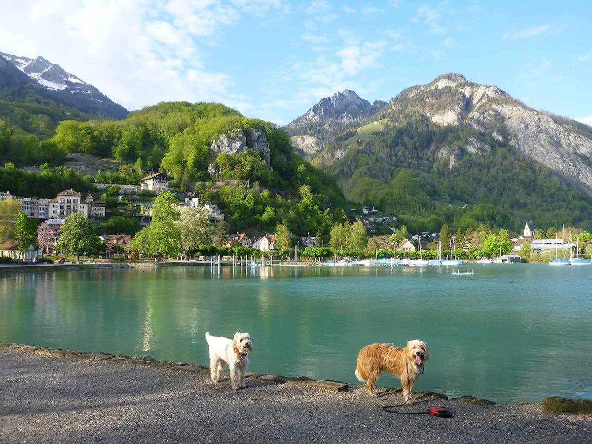 My 2 doggies and Weesen village - harbour site