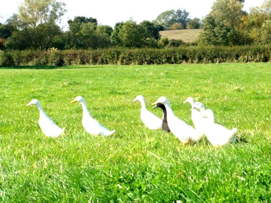 Manor Farm, 2 Bed near NEC/Airport - Hampton in Arden - Hus