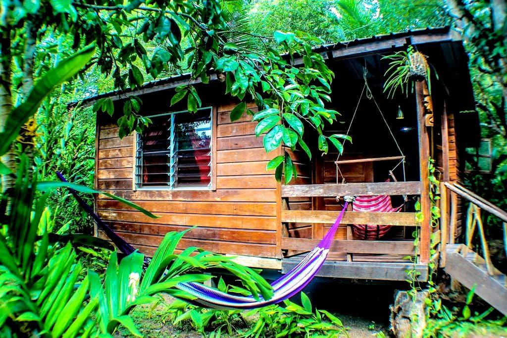 Caracol - Bullet Tree Falls - Cabin