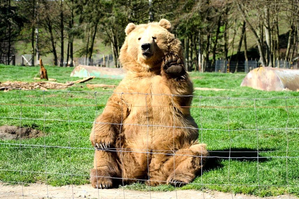 Test fake bear - Jordan Valley