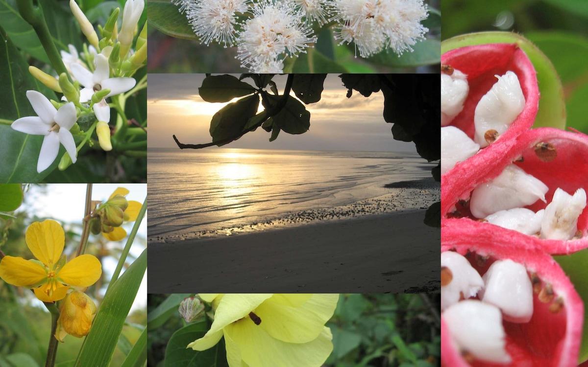 beach,  flowers , one minute's walk away..