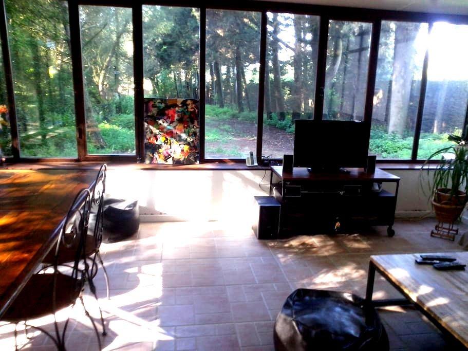 Chambre dans la pinède - Cazilhac