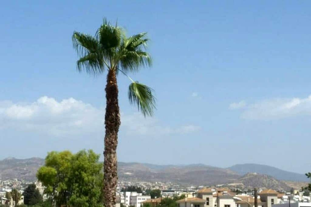 Private bedroom mountains and sea - Limassol - Byt