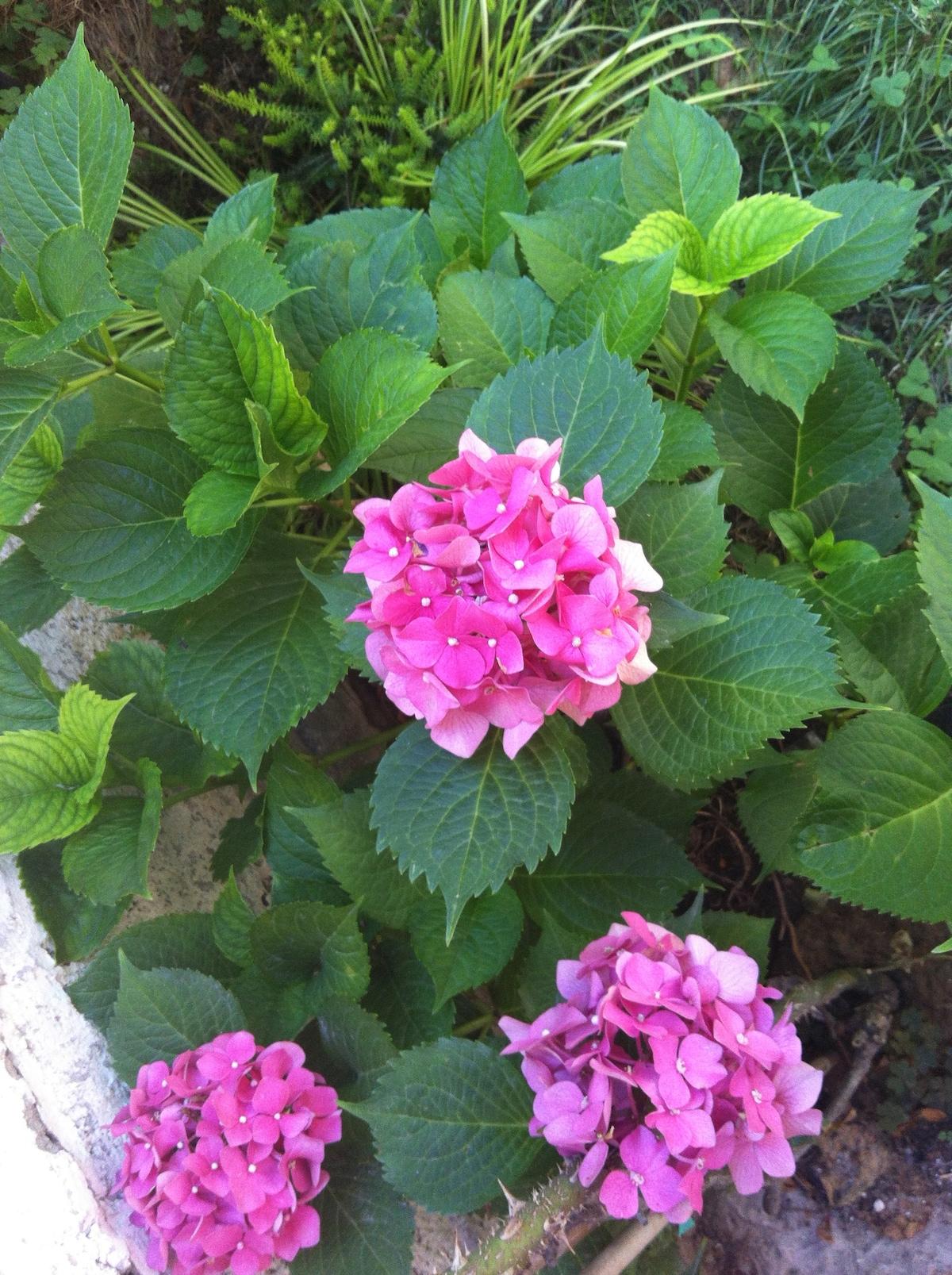 flowers in the garden!