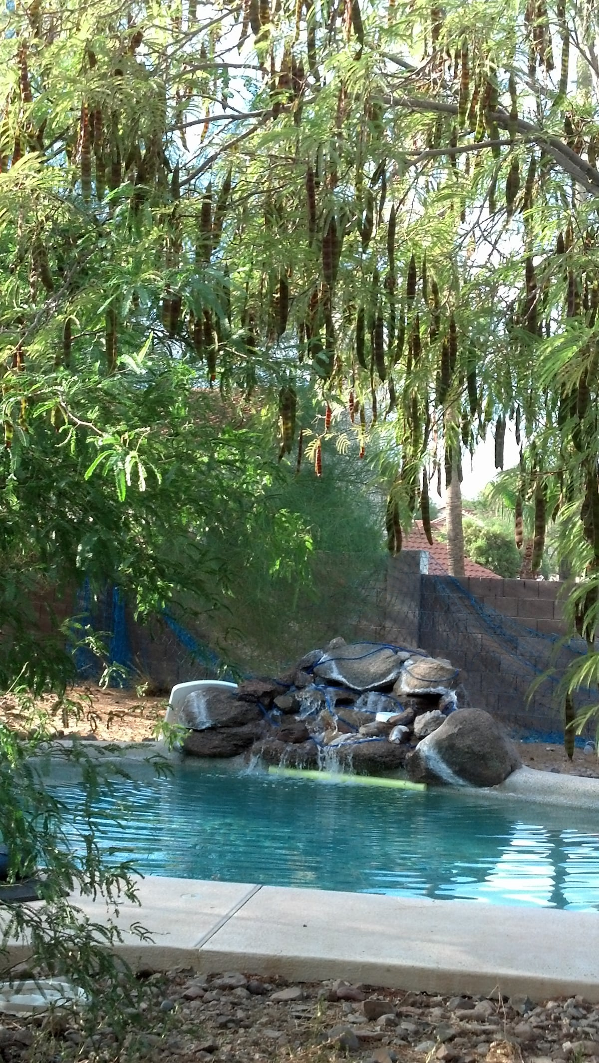 Quiet Tranquility & Poolside Tables & Pet Area 100' x 100'
