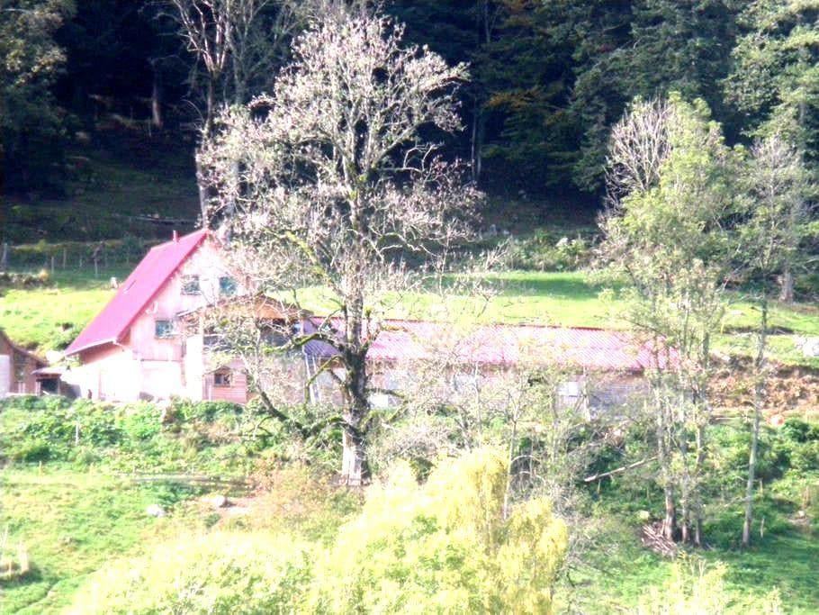 Chambre Casse noisette du Im-Berg - Metzeral - Talo