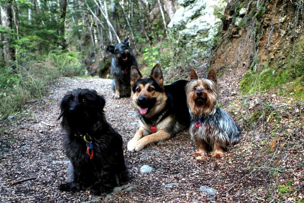 Peaceful, pet friendly retreat, - Lake Hayes Estate - Haus
