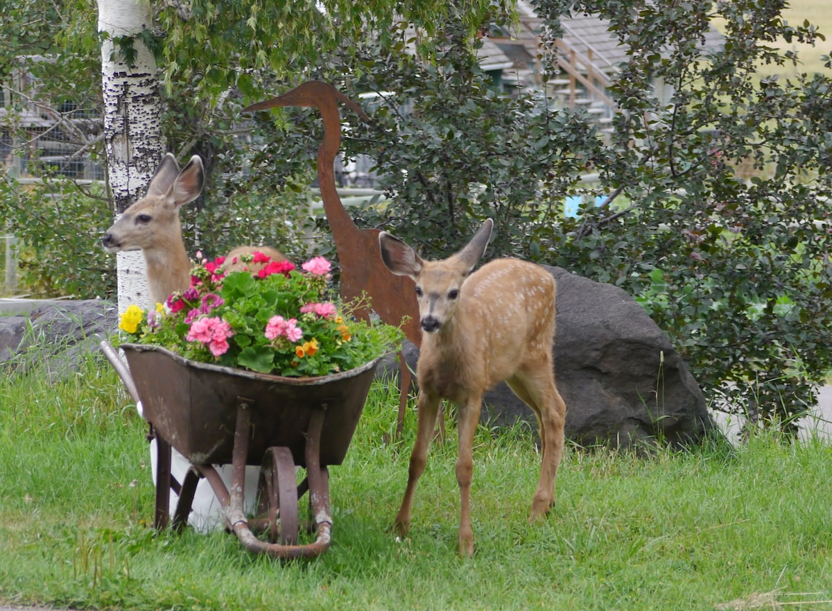 They love to eat our flowers!