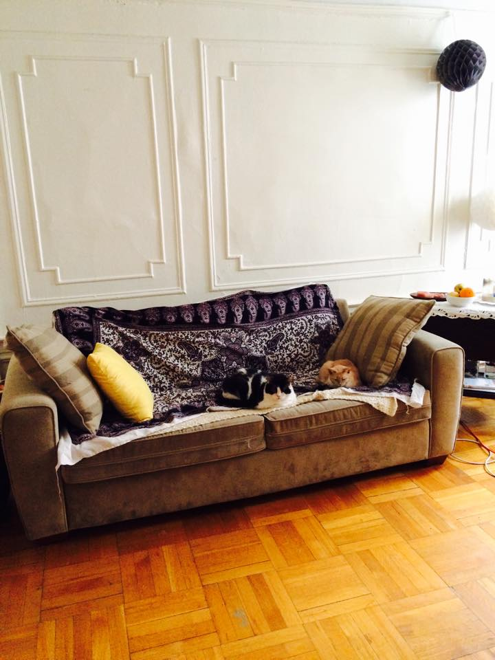 This is living room with two of my cats.