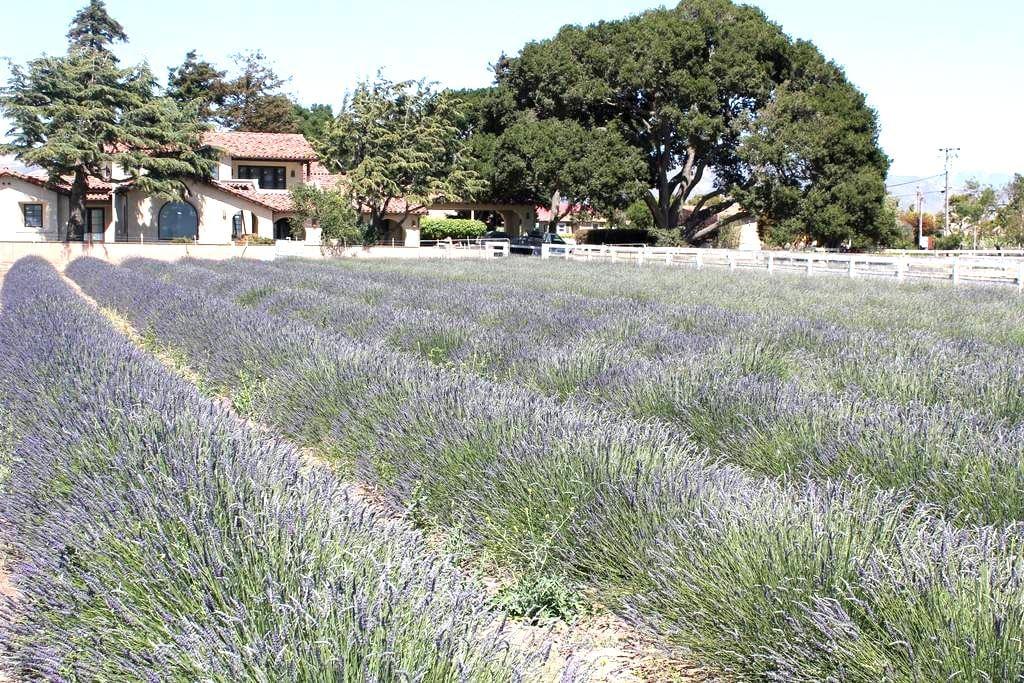The Mortensen Ranch - 萨利纳斯(Salinas)