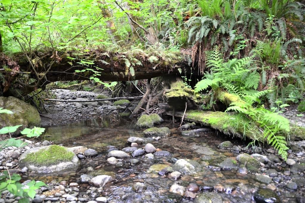 Urban Oasis 1 - Nature Tranquility - Langley - Huis