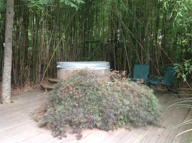 Hot tub right outside your door
