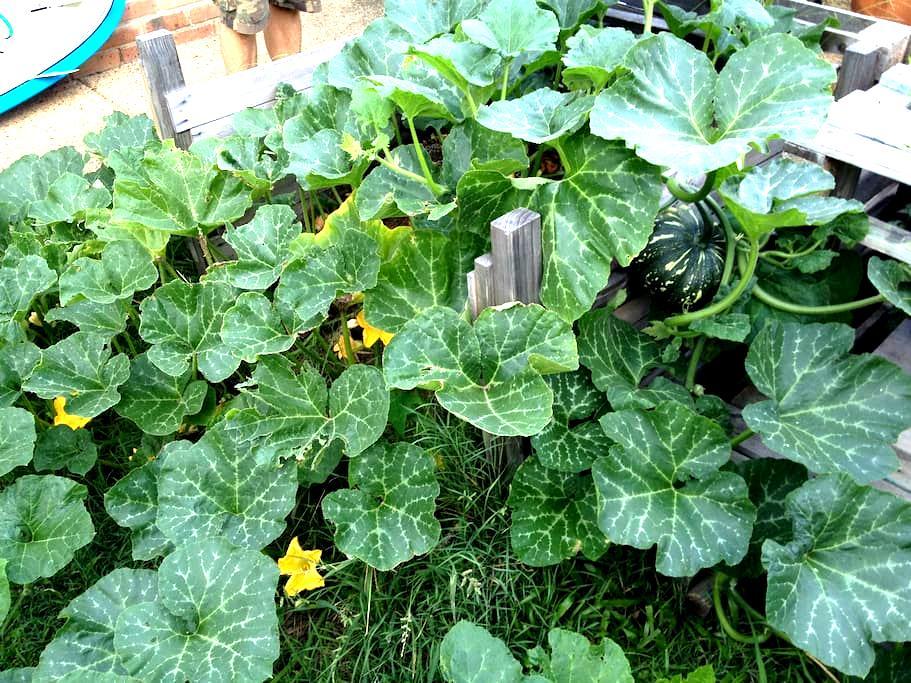 Busy in the Garden ! - Nerang - Ev
