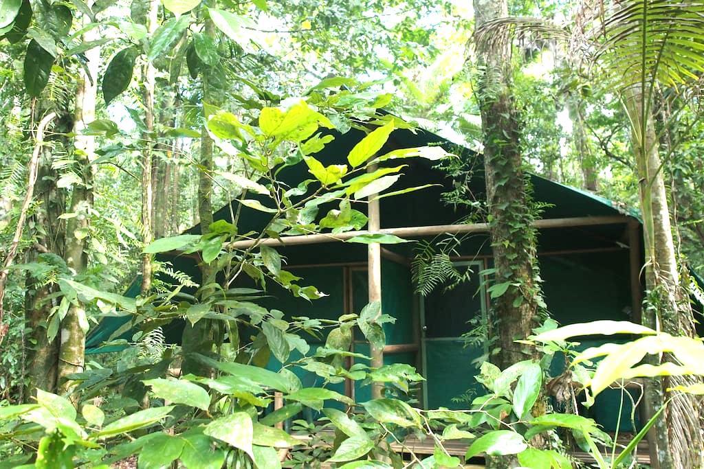 Daintree Crocodylus - Tropical Cabins - Cow Bay - Natur-Lodge