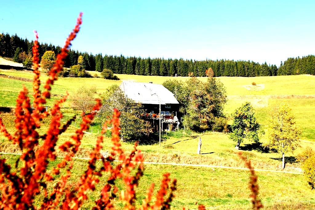 Schwarzwald pur - Schluchsee - Bed & Breakfast