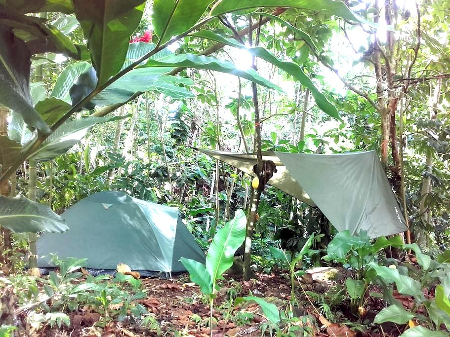 Natural Campsite at our Kalinago Home - Marigot - テント