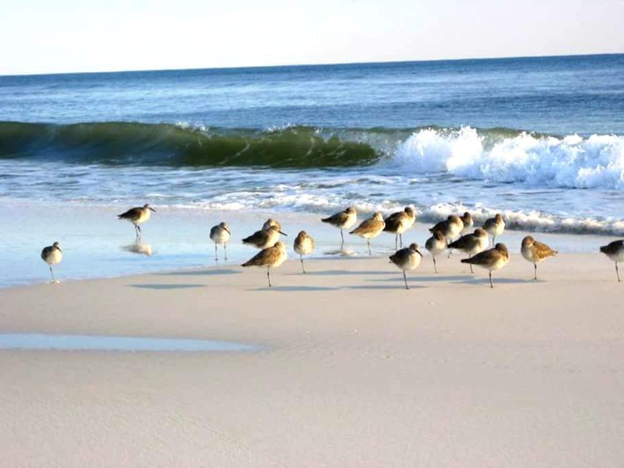 Sleepy Sandpiper - Walk to Beach! - Nokomis