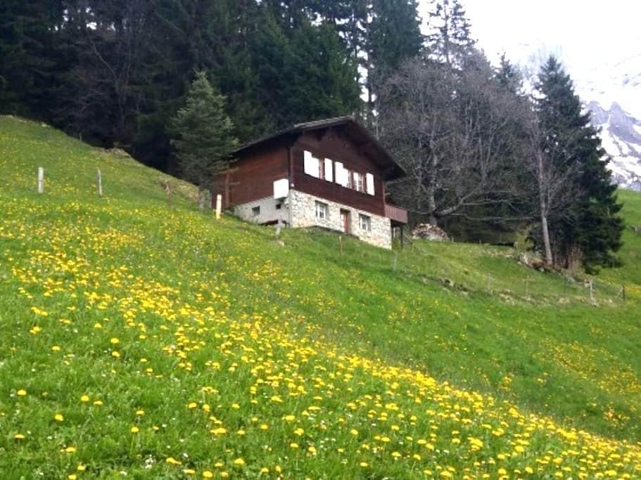 Berghütte Ahorn - Adelboden - Cabane