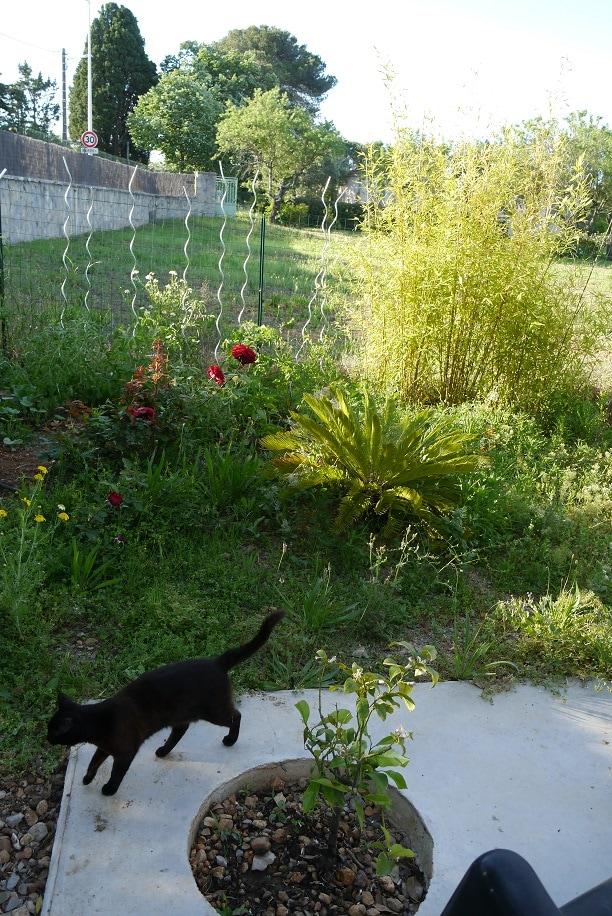 coin potager avec arrosage automatique au bout de la terrasse. Légumes frais tout le printemps et l'été