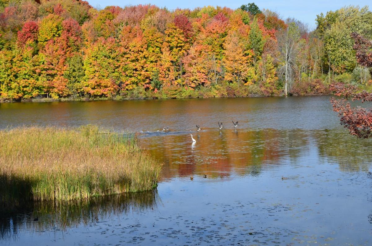 Gorgeous River Retreat