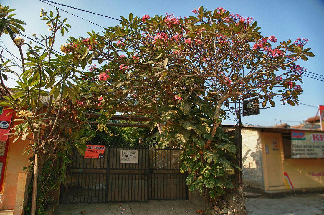 Greenery Garden in Budarno Homestay