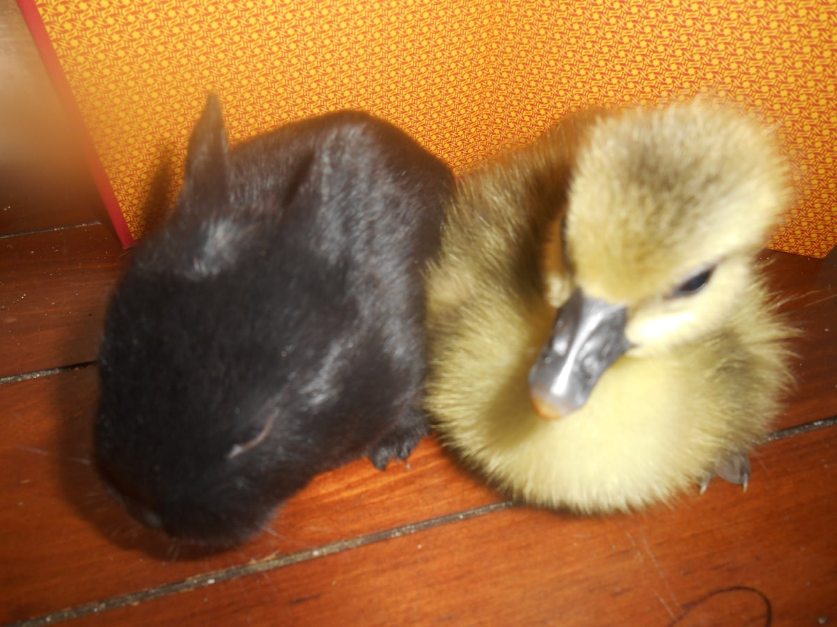 Bunny and Gosling