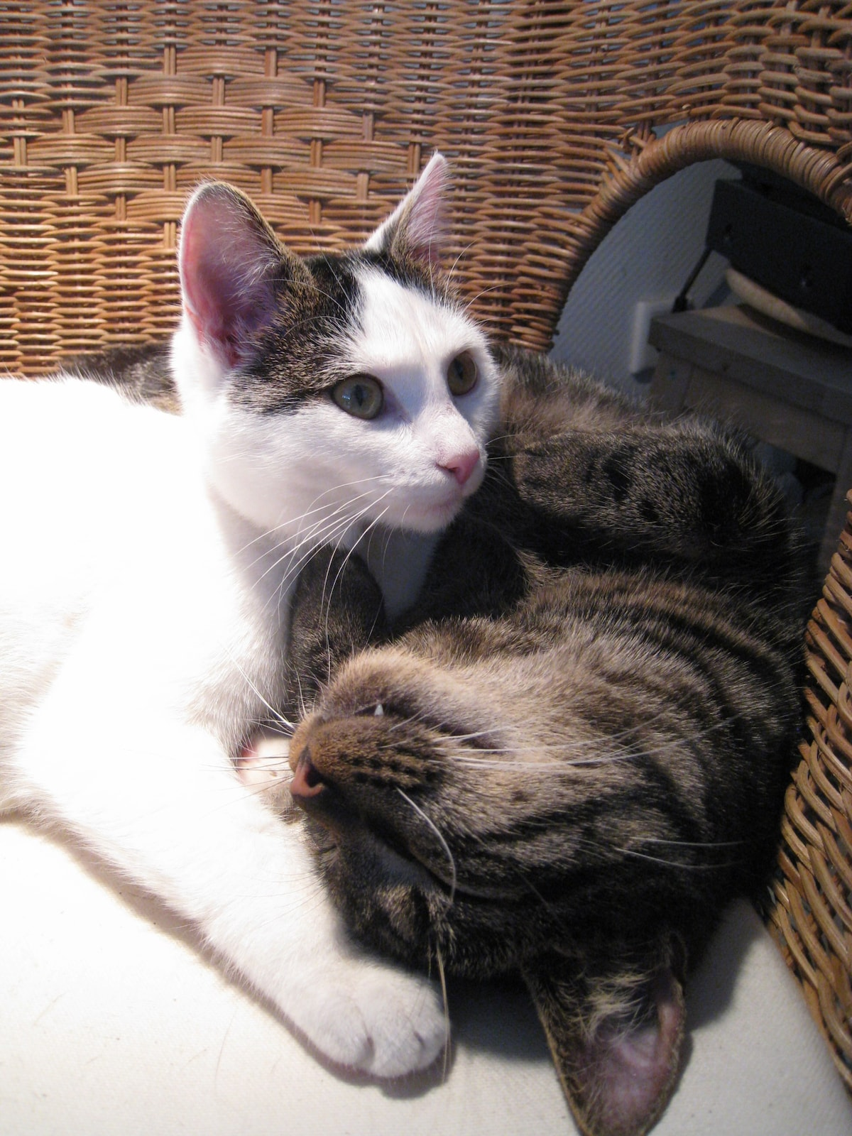 ***Hugo & Lilly, my two cats***