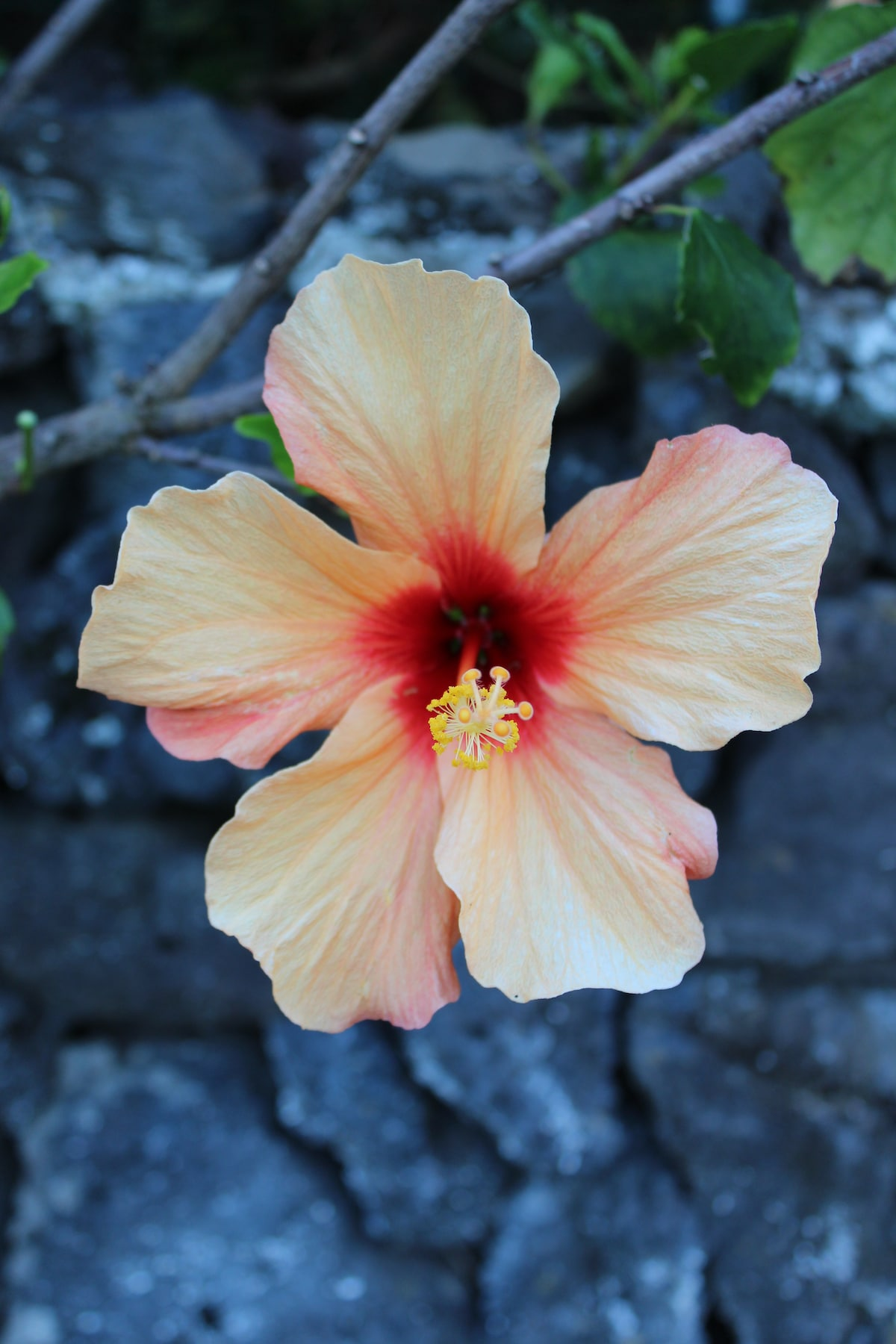 The House of Hibiscus